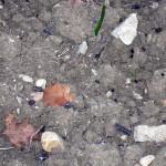 Granelli concime azotato