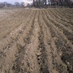 The soil in completed furrows
