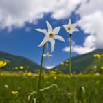 Ambienti umidi: fiore