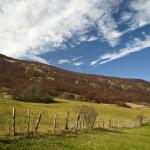 Praterie: Prati e boschi